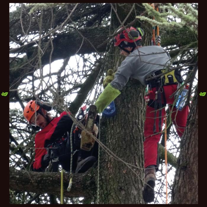 arboristik-arboriste-grimpeur2